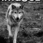 Brian Worley – Wild wolf