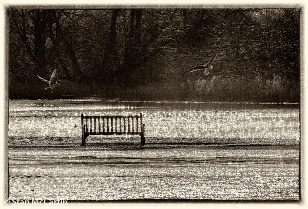 Sparkling Water - Stan McCartin