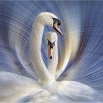 Swan Dance by Kathy Chantler