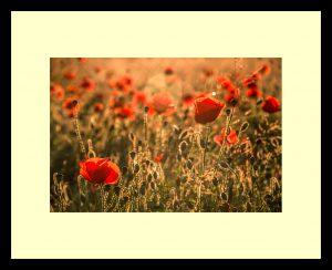 03 - Poppy Glow - Kathy Chantler
