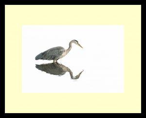 04 - Grey heron - Chenxi Ni