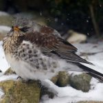 Fluffed Up Against the Cold by Sarah Jennings