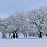 """Winter Coat"" by Laurence Doyle – ImageZ CC"