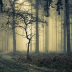 """Bix Woods in Fog, Near Henley Thames"" by Robin Dodd – Marlow CC"
