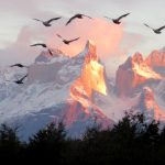 Birds Fly over the Mountains by Carol Haines