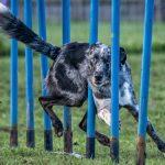 """Diagonal Dog"" by Tami Nunley"