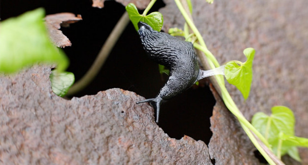Slugs, snails and orchids