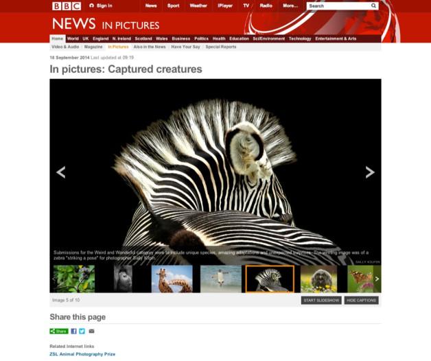 Sally Kilpin's Zebra wins ZSL Animal Photography Prize
