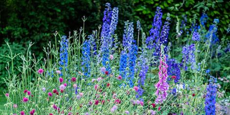 Summer Gardens, Tuesday 19th June 2018