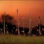 Bugs' Eye View by Julia Cleaver (Summer)