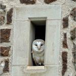 Looking Hootside the Window by Nicholas Razey