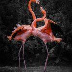Flamingos by Chenxi Ni