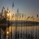 The Swan & Reeds by Peter Carter