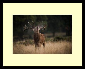 02 - Stag Roar - Nick Bennett