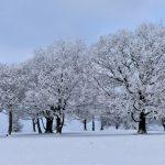 """Winter Coat"" by Laurence Doyle – ImageZ CC"