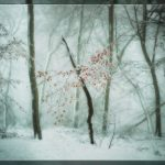 """Marcescence"" by Julia Cleaver ARPS – ImageZ CC"