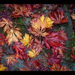 """""""Autumn Leaves"""" by Sally Kitchingman – Leighton Buzzard PC"""