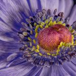 Heart of the Flower by Barry Coxon