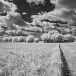 Among the Fields of Barley © Barry Coxon