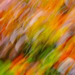 A Blaze of Colour by Jan DellI