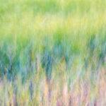 Pastel Field © John Timbrell