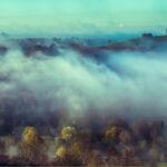 The Fog © Peter Carter