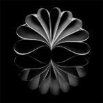 Paper Lotus Reflected © Chenxi-Ni