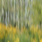 Woodland Colours Jan © DellITAL CAMERA
