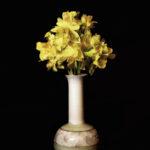 Daffodil Mix Up©David Jones