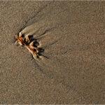 Seaweed © John Timbrell